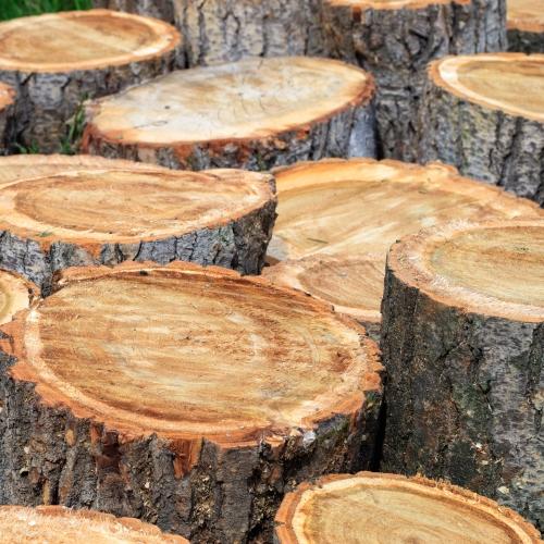 bomen gevierschaald of op bool